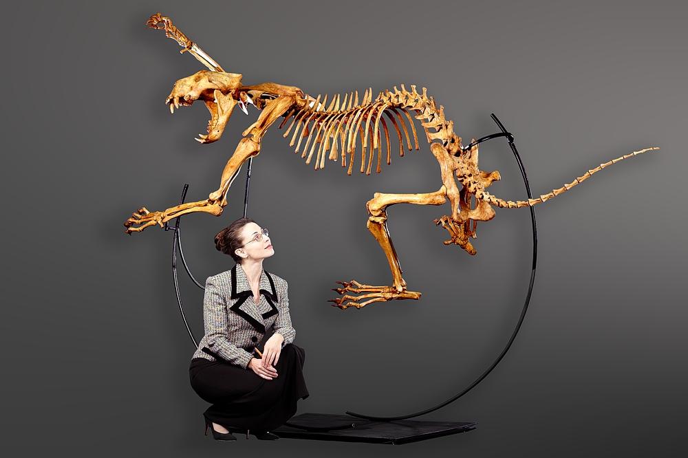 russian-cave-lion-skeleton.jpg&sa=X&ei=U6fNTqznEoeC2wWKpIy1Dw&ved=0CAsQ8wc&usg=AFQjCNEd8X5pIQrw1PADT164D4nYgpe9SQ