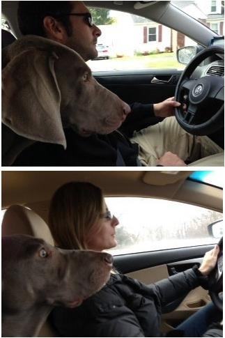 dog decides
