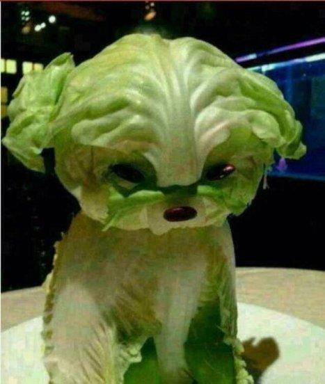 lettuce-dog