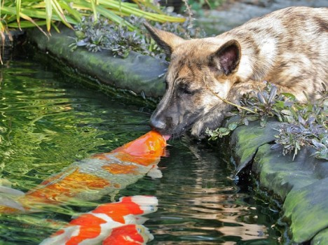 POTD_Fish-and-dog-_2741363k